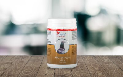 PROTEIN PLUS – the 'gold' mixture for our champions